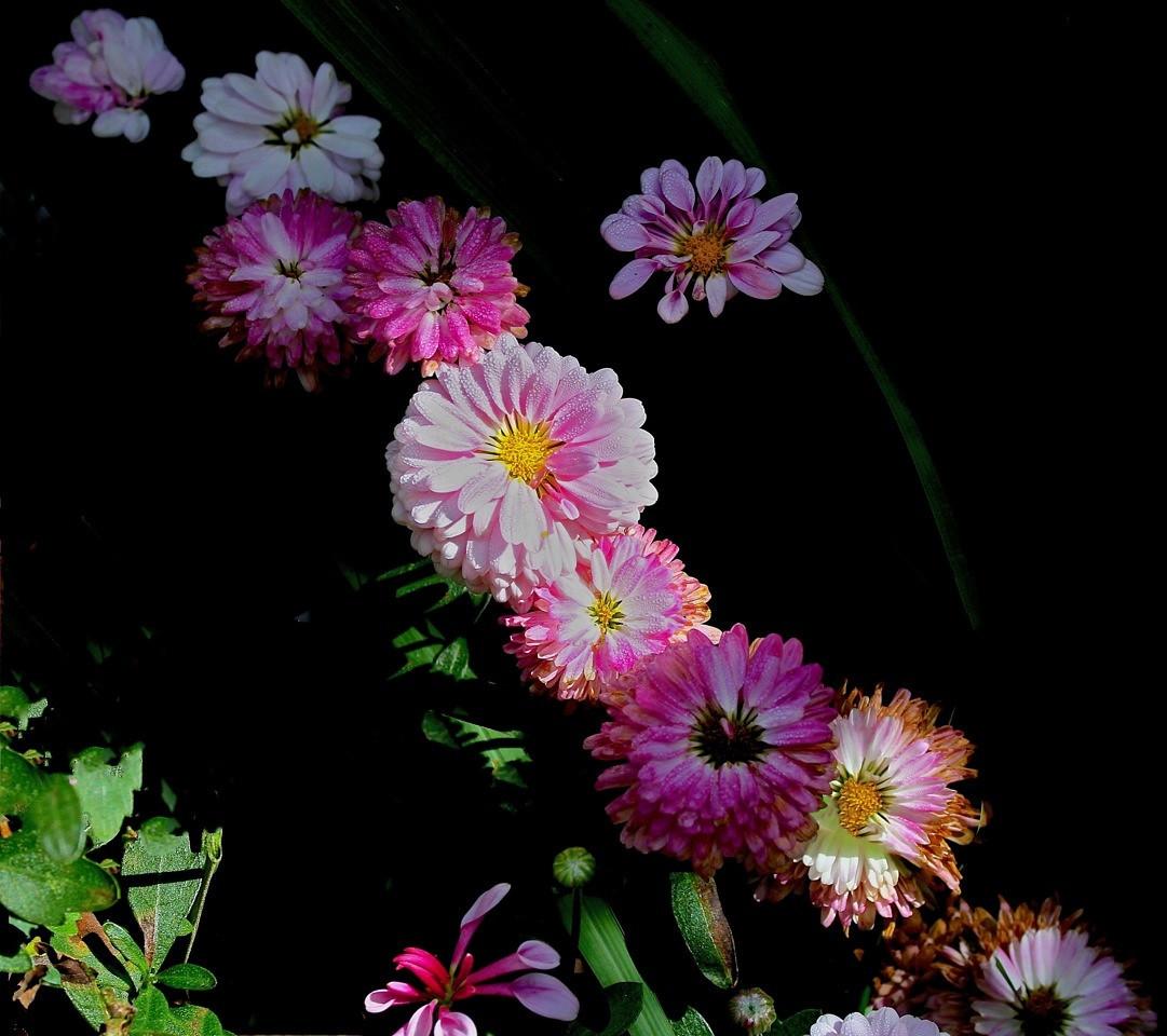 B - Fall's Final Festive Floral Fling rev 6
